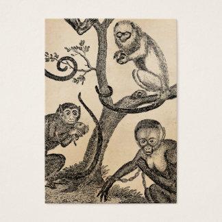 Vintage Monkey Illustration - 1800's Monkeys