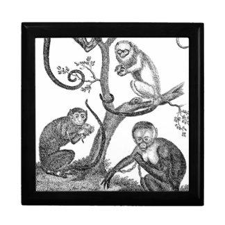 Vintage Monkey Illustration - 1800's Monkeys Large Square Gift Box