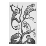 Vintage Monkey Illustration - 1800's Monkeys Poster
