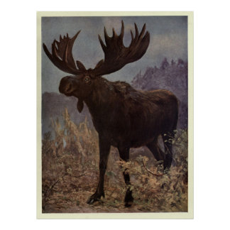 Vintage Moose Painting (1909) Poster
