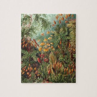 Vintage Moss Plants by Ernst Haeckel, Muscinae Jigsaw Puzzle