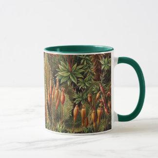 Vintage Moss Plants by Ernst Haeckel, Muscinae Mug