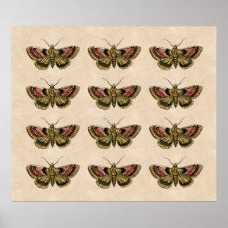 Vintage Moth Art Poster
