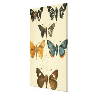 Vintage Moth Illustrations Canvas Print