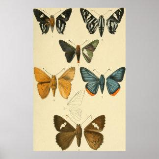 Vintage Moth Illustrations Poster