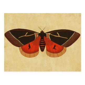 Vintage Moth Postcard