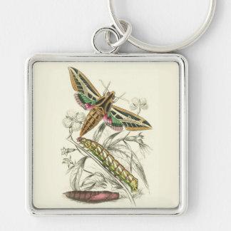 Vintage Moth Progression Key Chains