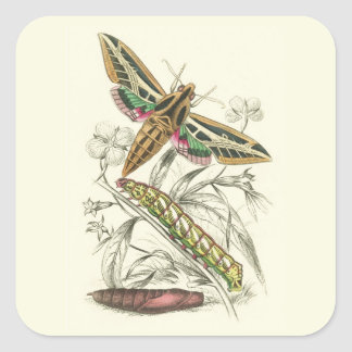 Vintage Moth Progression Square Sticker