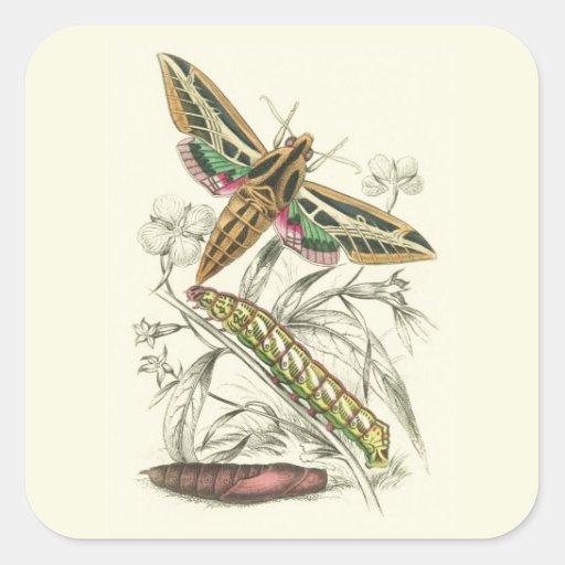 Vintage Moth Progression Square Stickers