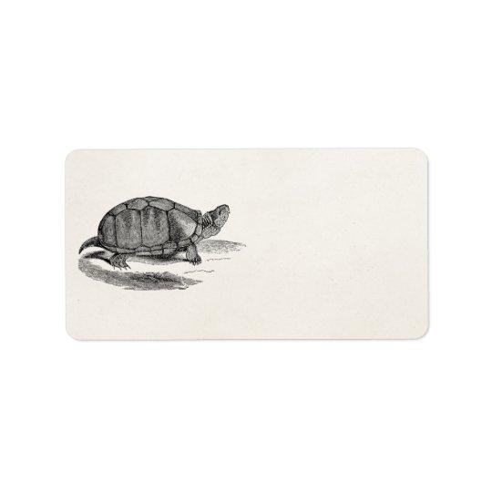 Vintage Mud Tortoise - Reptile Turtle Template Address Label