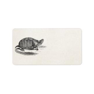 Vintage Mud Tortoise - Reptile Turtle Template Label