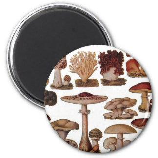 Vintage Mushroom 6 Cm Round Magnet