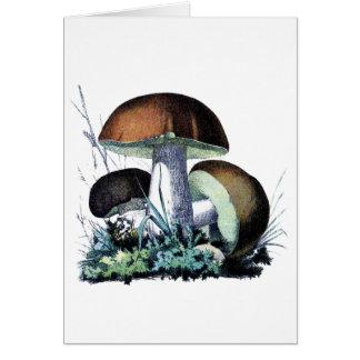 vintage mushroom art card