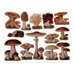 Vintage Mushroom Post Cards