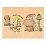 Vintage Mushroom Print Post Card