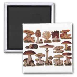 Vintage Mushroom Square Magnet