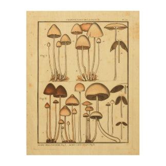Vintage Mushrooms Brown Cap French Art Print