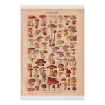 Vintage mushrooms poster 1920