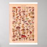 Vintage mushrooms poster 1920