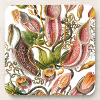Vintage Nature Art 3 Beverage Coaster