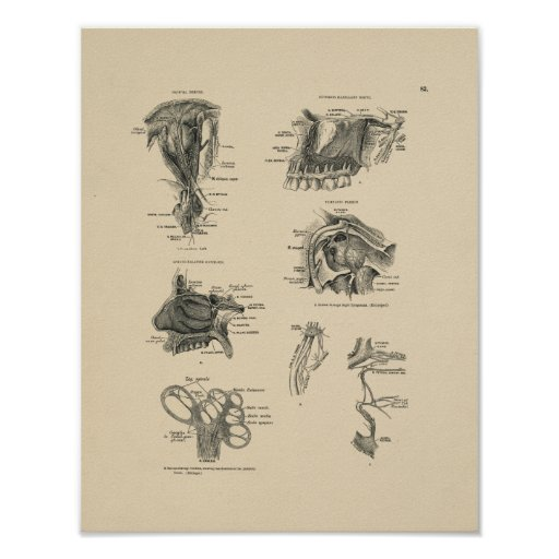 Vintage Nerve Anatomy 1880 Print