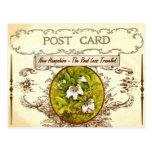 Vintage New Hampshire State Flower Postcard