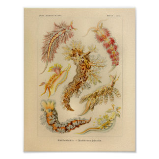 Vintage Nudibranchia Color Ernst Haeckel Art Print