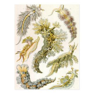 Vintage Nudibranchia, Sea Slugs by Ernst Haeckel Postcard