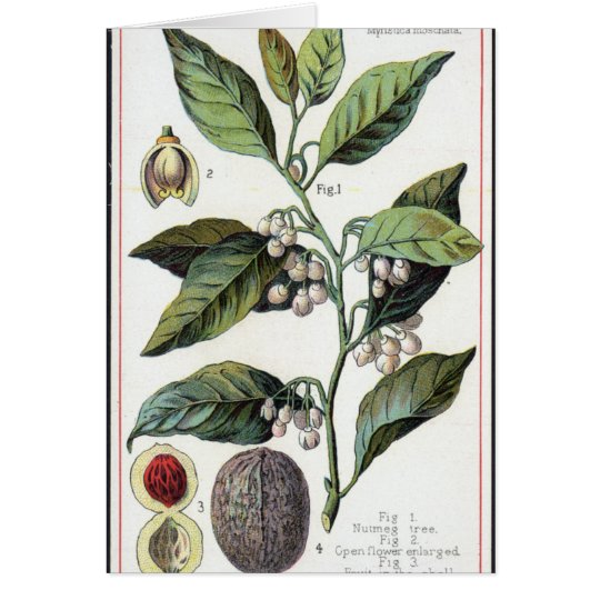 Vintage nutmeg artwork card