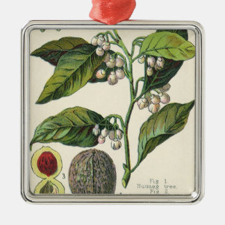 Vintage Nutmeg Plant Fruit Seeds, Food Herbs Spice Silver-Colored Square Decoration