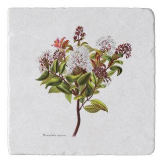 Vintage NZ Flowers - Meterosideros albiflora Trivet