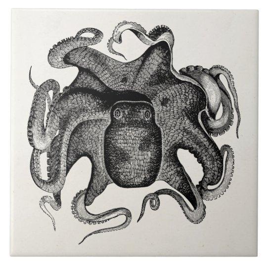 Vintage Octopus Like Cuttlefish 1800s Cuttle Fish Large