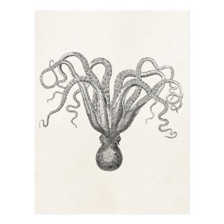Vintage Octopus Poulpe Eight Armed Cuttle Fish Postcard
