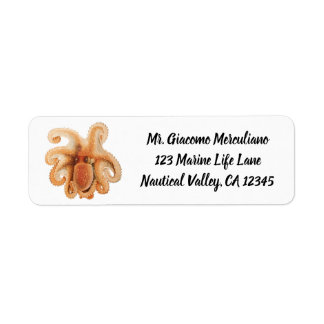 Vintage Octopus Salutii, Marine Aquatic Animals