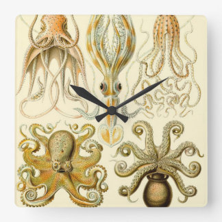Vintage Octopus Squid Gamochonia by Ernst Haeckel Square Wall Clock