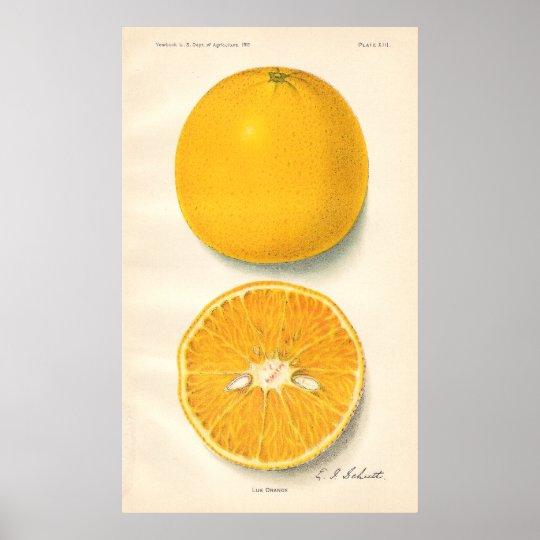 Vintage Oranges Poster