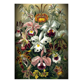 Vintage Orchid Botanical Print Pack Of Chubby Business Cards