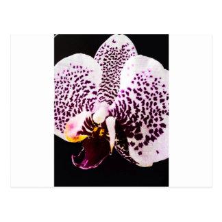 Vintage Orchid Postcard