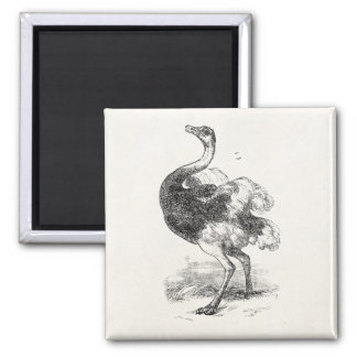 Vintage Ostrich Birds Personalized Birds Ostriches Magnet