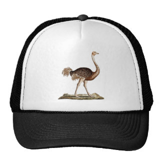 Vintage Ostrich Illustration Retro 1700s Ostriches Cap
