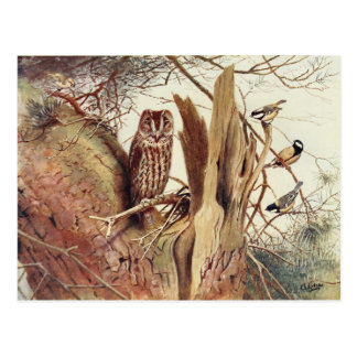 Vintage Owl & Birds Painting Postcard