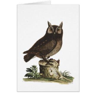 Vintage Owl Drawing Greeting Card