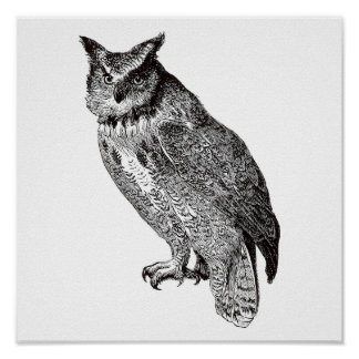 Vintage Owl Illustration - Print