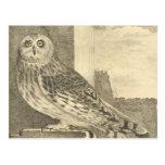 Vintage Owl Postcards