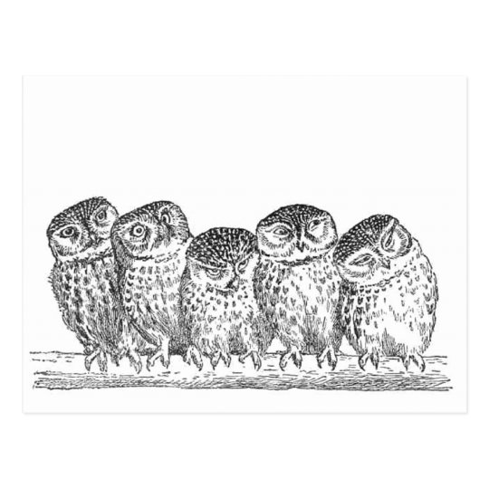 Vintage Owls Postcard