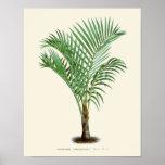 Vintage Palm Botanical Print