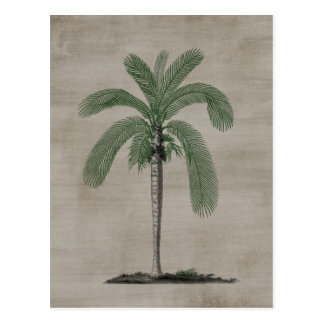 Vintage Palm Tree Postcard