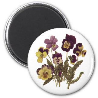 Vintage Pansies in Bloom, Floral Garden Flowers 6 Cm Round Magnet