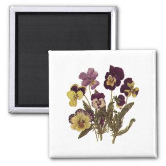 Vintage Pansies in Bloom, Floral Garden Flowers Square Magnet