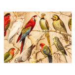 Vintage Parrot Cockatoo Conure Parakeet Cockatiel Post Cards